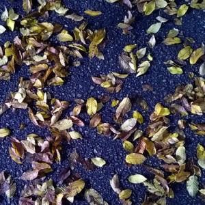 otoñomorado