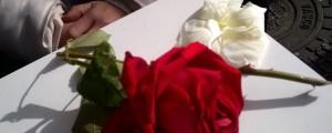 rojoyblanco